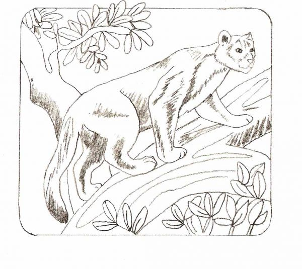 Jungle Cat Drawing Simple animal drawings for beginners - traditional ... Jungle Drawing With Animals