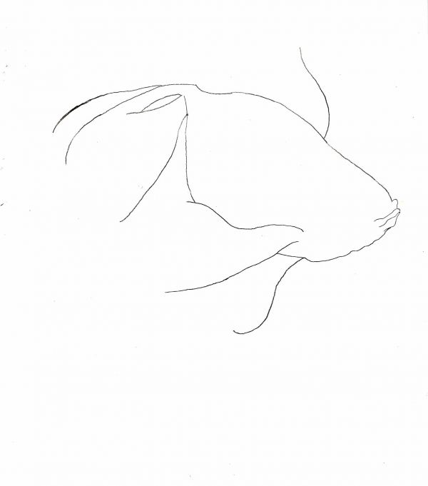 Goldfish line drawing - photo#10