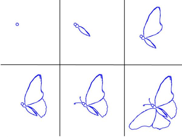 How To Draw A Butterfly Step By Step Realistically Step 6How To Draw A Step By Step Butterfly