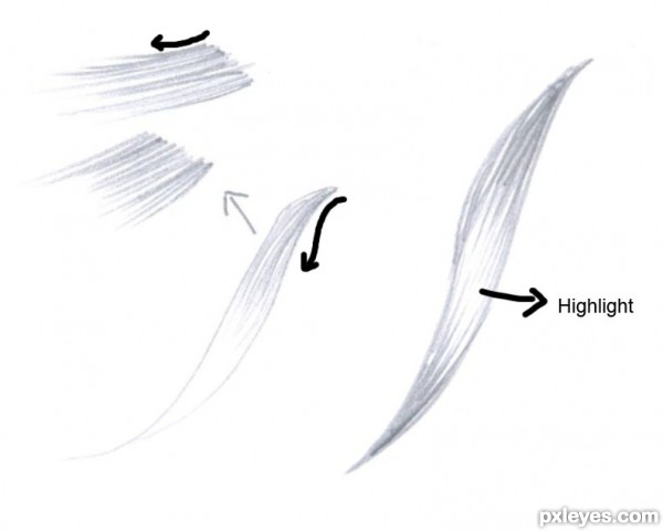 How to Highlight Hair Drawing in This Way The Fill The Hair