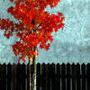 avatar Karen39W446