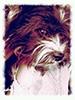 avatar Mambo5