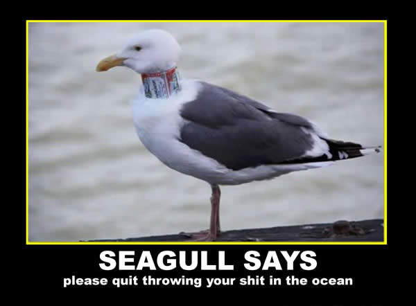 Seagull Says Photoshop Picture