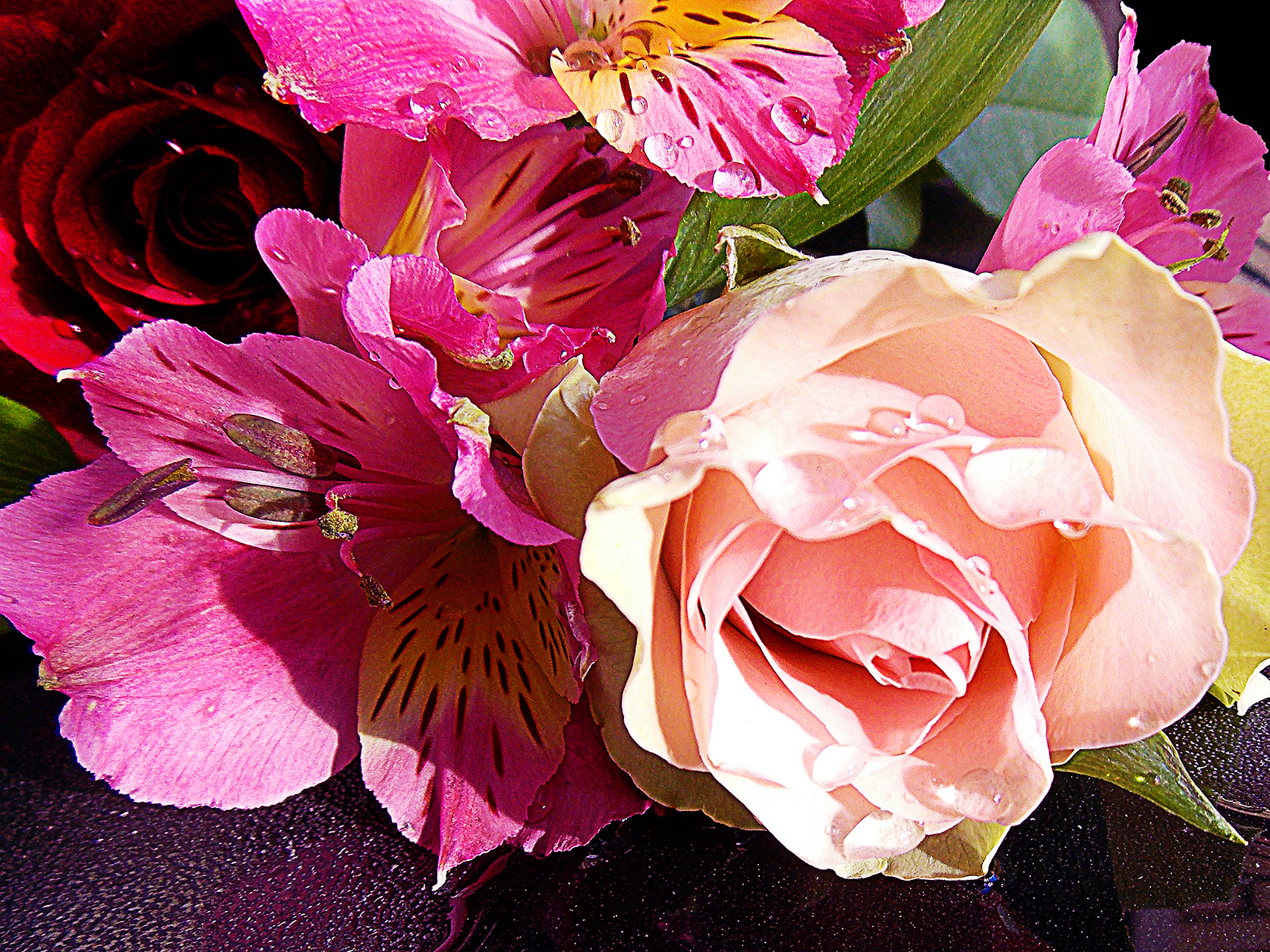 picture album called 'nice flowers'   uploaded by binder, Beautiful flower