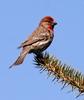 avatar birdlady