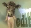 avatar editterrorist