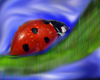 avatar ladybug