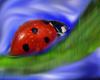 avatar ladybug