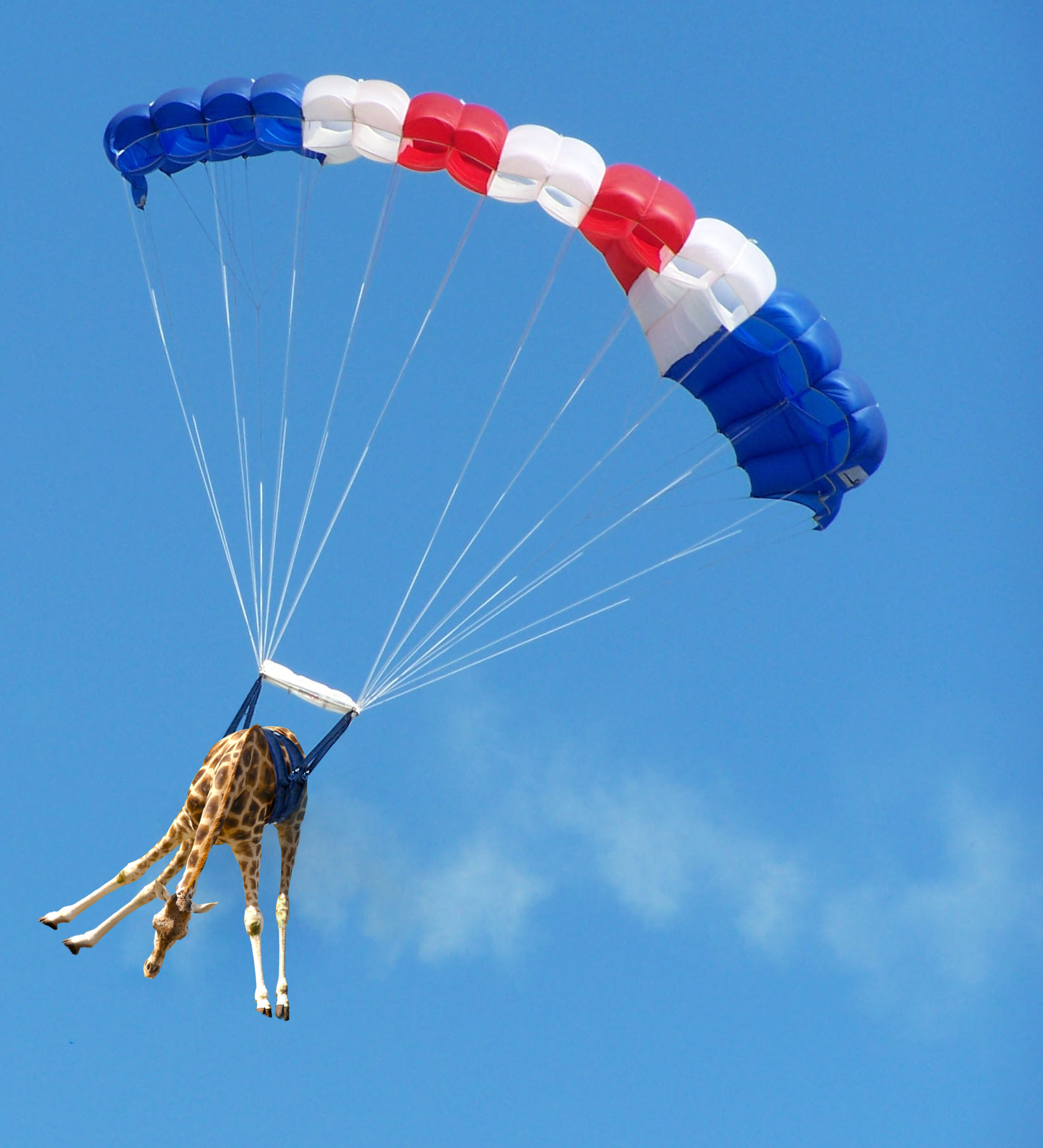 Parachutist giraffe (15135) picture by mqtrf, in album ...