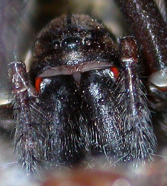 Picture album called 39 macro arachnids 39 3930 uploaded for Extra mural cemetery brighton