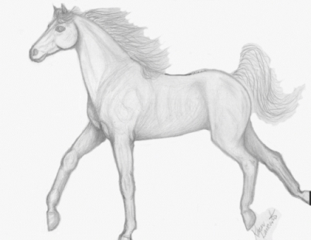 Skinny Horse Drawing Pencil Drawing of